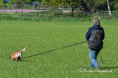 Clubkamp-Sph-Volharding-Venlo-66-van-227