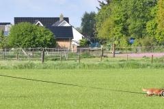Clubkamp-Sph-Volharding-Venlo-67-van-227