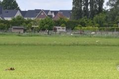 Clubkamp-Sph-Volharding-Venlo-73-van-227