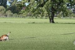 Clubkamp-Sph-Volharding-Venlo-99-van-227