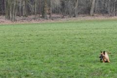 Koppelwedstrijd Stiphout '19 (106 van 179)