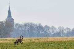 Koppelwedstrijd Stiphout '19 (67 van 179)