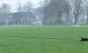 NBG Midden Brabant Regiowedstrijd 30 mrt '19