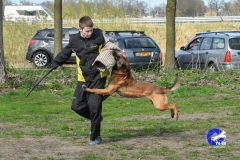 NGB-Midden-Brabant-Regiowedstrijd-5-6-296-van-336