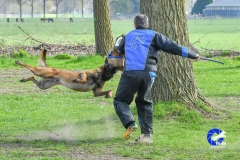 NGB-Midden-Brabant-Regiowedstrijd-5-6-301-van-336