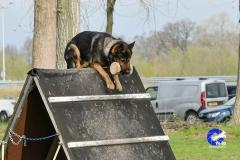 NGB-Midden-Brabant-Regiowedstrijd-5-6-31-van-336