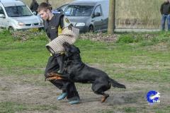 NGB-Midden-Brabant-Regiowedstrijd-5-6-327-van-336