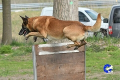 NGB-Midden-Brabant-Regiowedstrijd-5-6-57-van-336