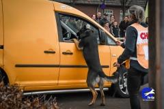 3e-Praktijdwedstrijd-Loosbroek-2019-15-van-233