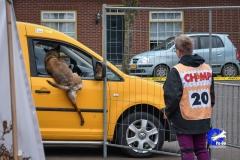 3e-Praktijdwedstrijd-Loosbroek-2019-84-van-233